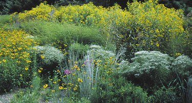 bank of native plants