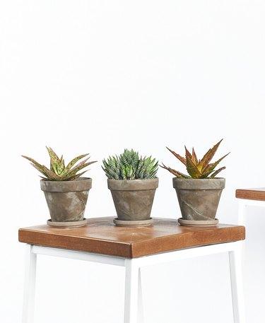 three aloe plants