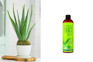 Aloe, healing, sunburn
