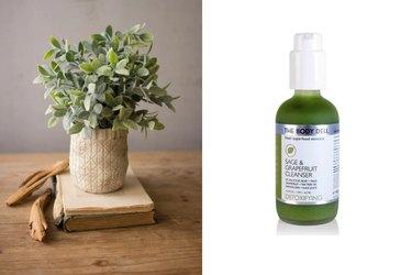 Sage shrub, anti-oxidant