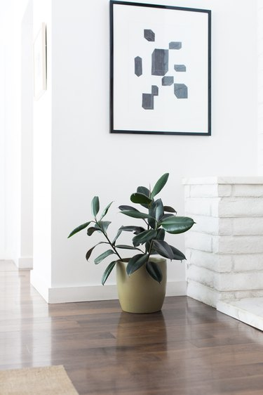 Things a Houseplant Needs to Survive: Space