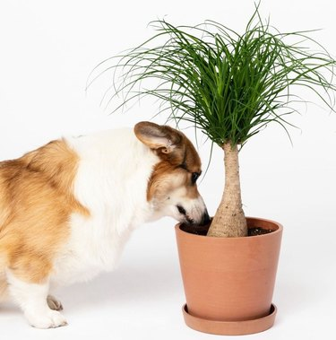 puppy sniffing plant