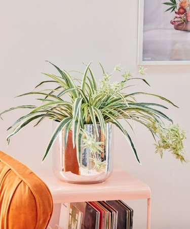 Not Good With Plants? 10 Alternative Ways to Add Some Greenery to Your Indoor Space