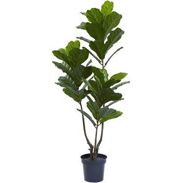 amazon fiddle leaf fig