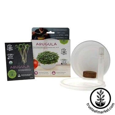 Arugula microgreens growing kit