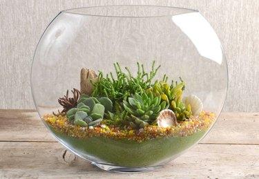 Ocean-theme succulent container.