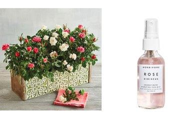 roses, gift, spray