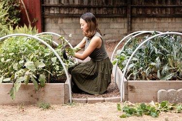 Woman tending to her vegetable garden