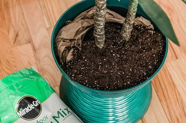 Cover the base of the plant and filler paper or peanuts with a layer of potting mix.
