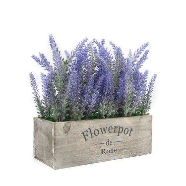 amazon flowerpot lavender plant