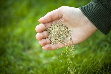 Grass seed.
