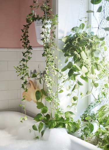 bathroom curtain idea with bathtub in a pink and white bathroom with lots of live plants hanging in front of the window