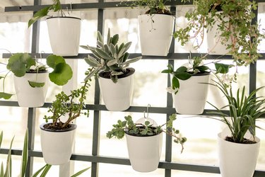 White planter pots hanging on trellis vertical garden