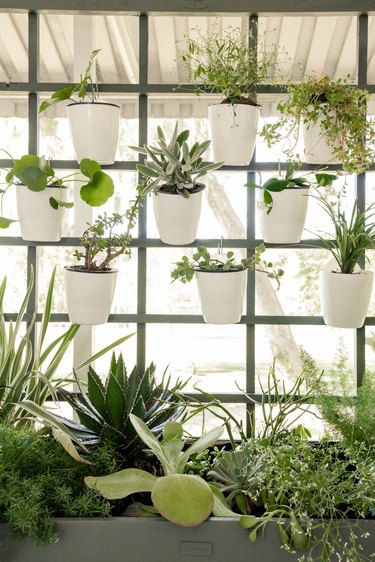 DIY vertical garden plant wall