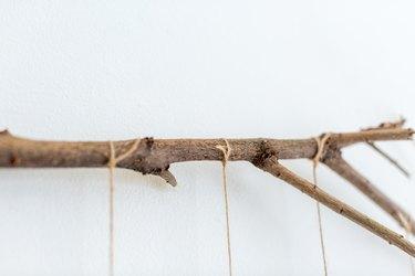 found wood branch