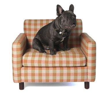 Dog Lounge Chair