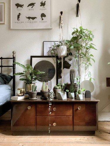 plant-themed bedroom idea with small cacti collection
