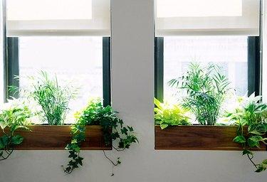 indoor window flower boxes by Terrain