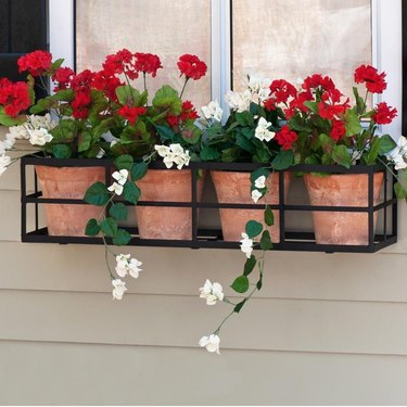 terra cotta planters with begonias in window flower box