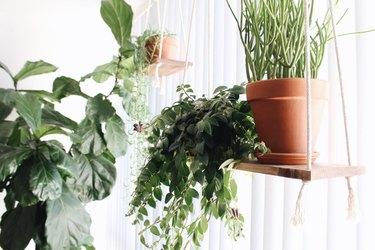 hanging plants on window plant shelf