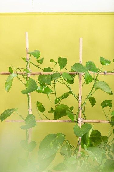 Tbe plants