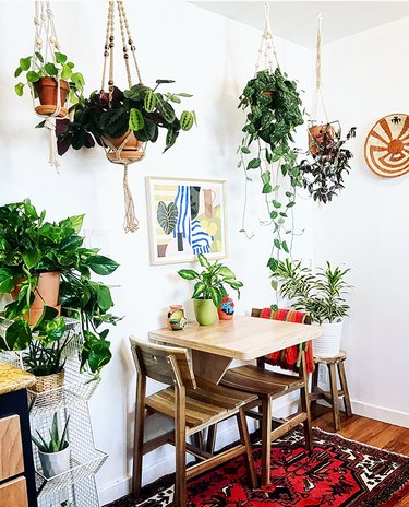 plants in kitchen dining nook