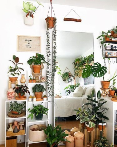 plant themed bedroom idea with hanging and potted foliage