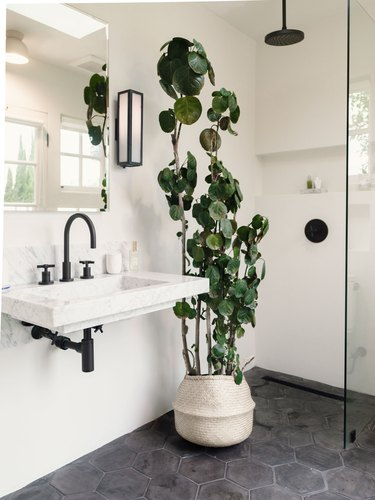 black overhead shower head, black faucet handle, glass shower door, rattan vase with large green plant, wall-mounted sink with black faucet and handles, rectangular mirror, gray hexagon floor tiles