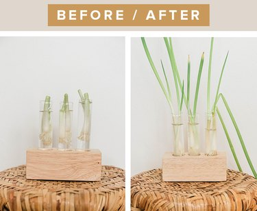 Regenerate cut green onions by placing the root ball in water.