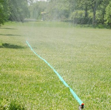 Sprinkler hose in operation.