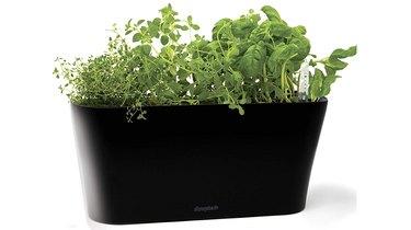 Window Garden Aquaphoric Herb Garden Tub
