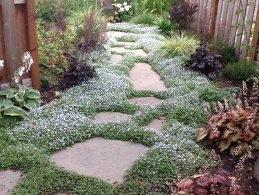 Stone pathway.