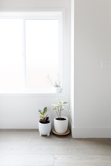 white potted plants in a corner near window