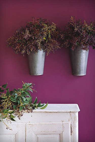 two plants on a wall