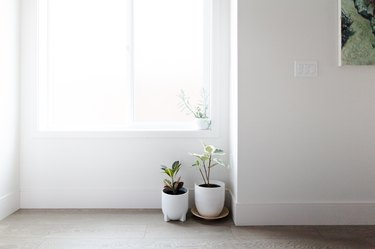 Window with natural light and plants