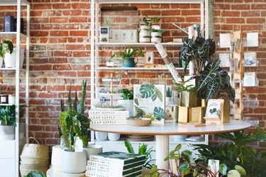 store with books and plants