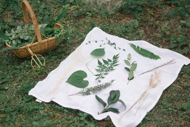 Various leaves and flowers arranged on white cloth on the grass next to a basket full of greenery clippings