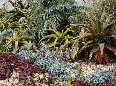 Variety of succulents,