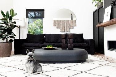 Miniature schnauzer on rug in modern home