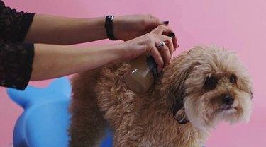 brush your pet
