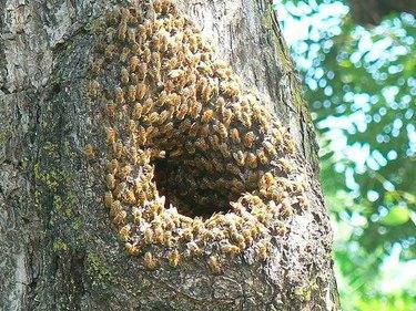 Bee nest in the woods.