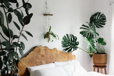 live wood headboard plant lady room