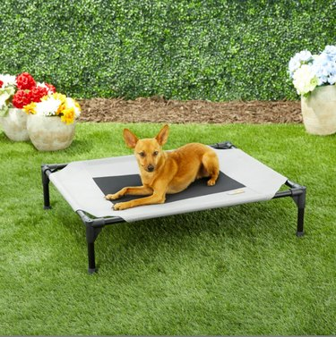 dog on an elevated dog bed in a backyard