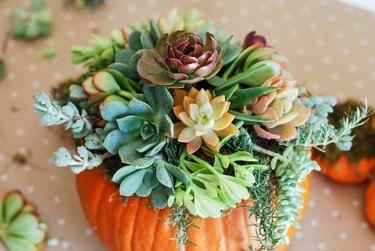 modern succulent fall flower arrangement in a pumpkin