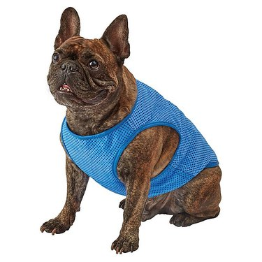 dog wearing blue cooling vest