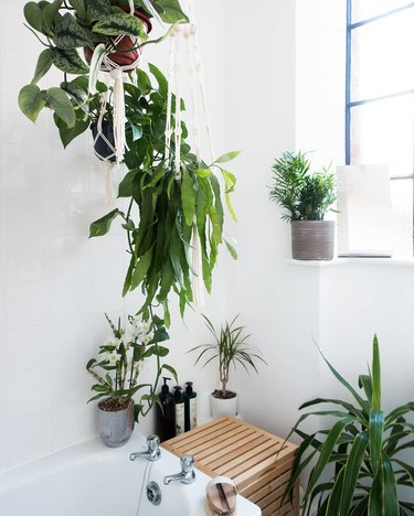 Plant-filled bathroom with hanging and potted plants near bathtub