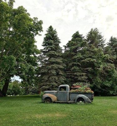 Vintage pickup truck.
