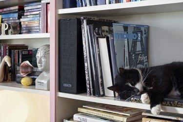 bookshelf with cat, books, and speaker