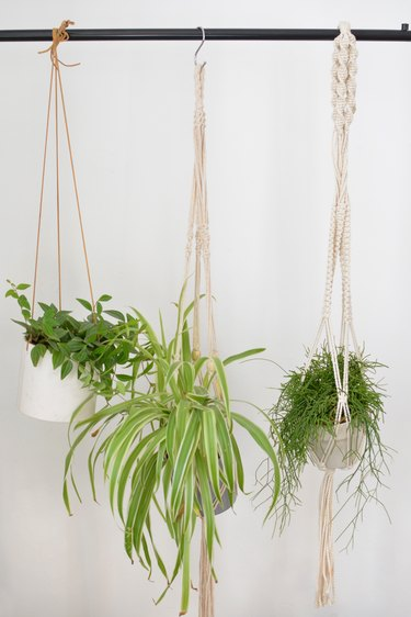 Hanging plants, including a spider plant