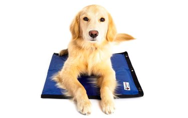 CoolerDog Dog Cooling Pad